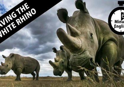 Saving the white rhino